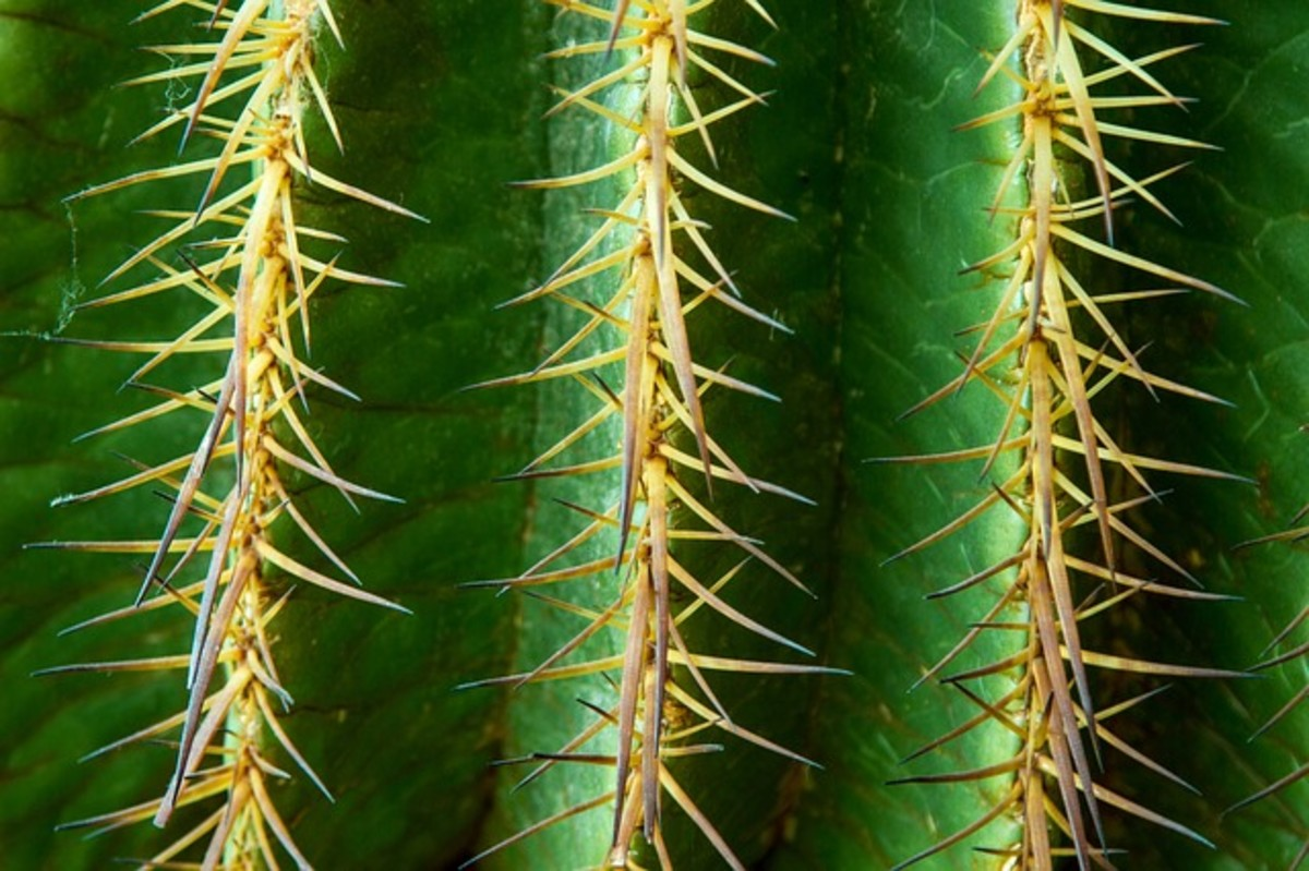 Thorns help protect a plant from being eaten