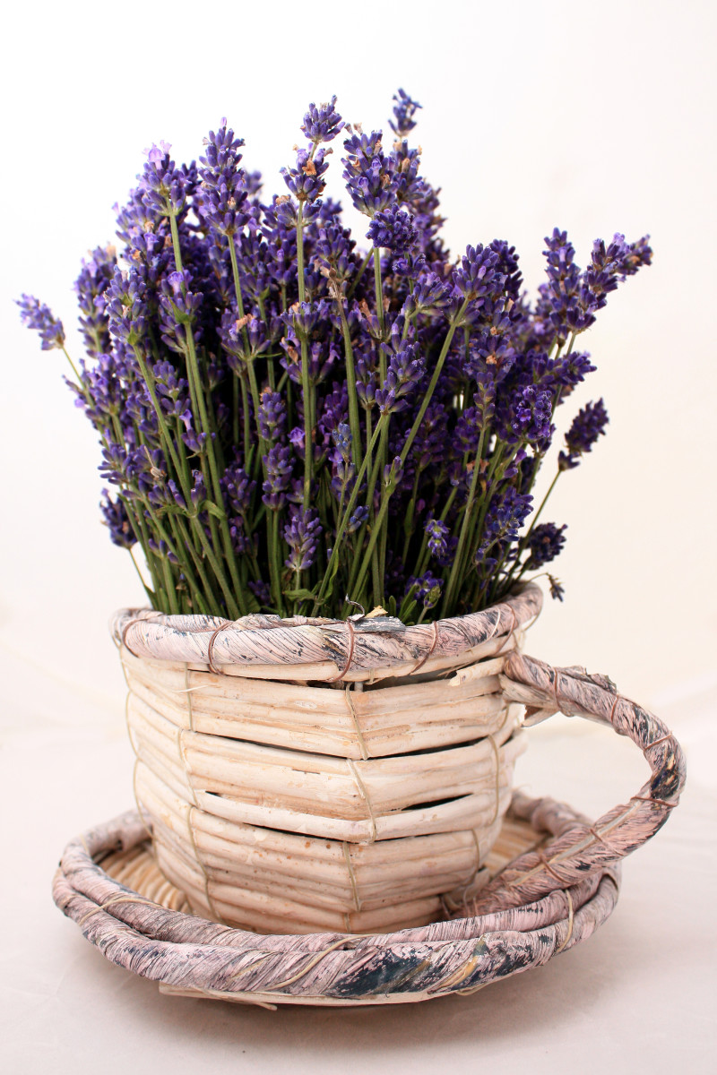 Beautiful saucer of lavender flowers