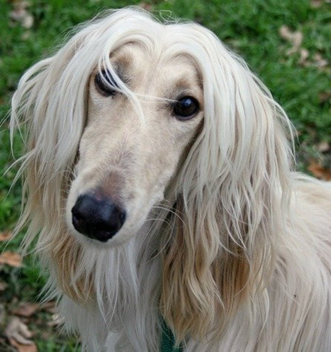 dog-breeds-that-are-not-typically-suitable-as-family-pets