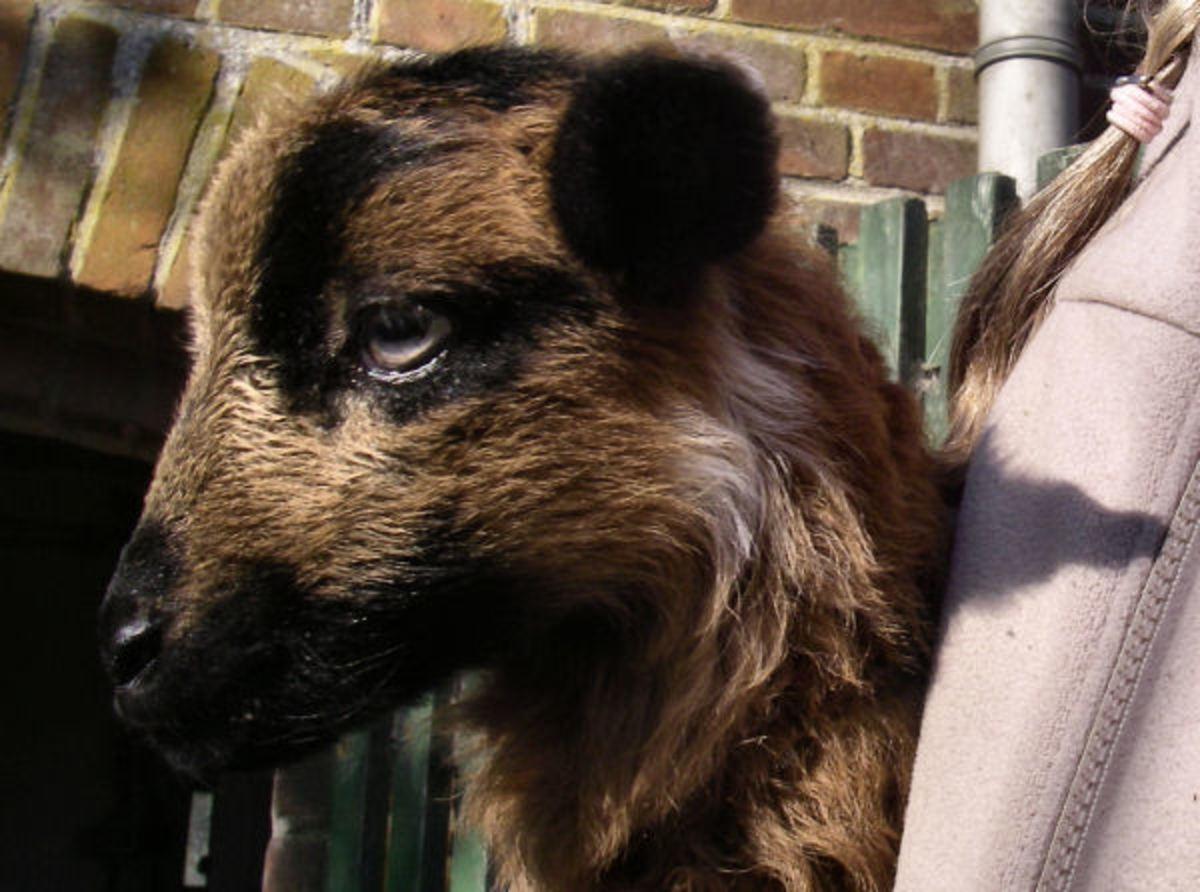 A selfie of lamb Rachel