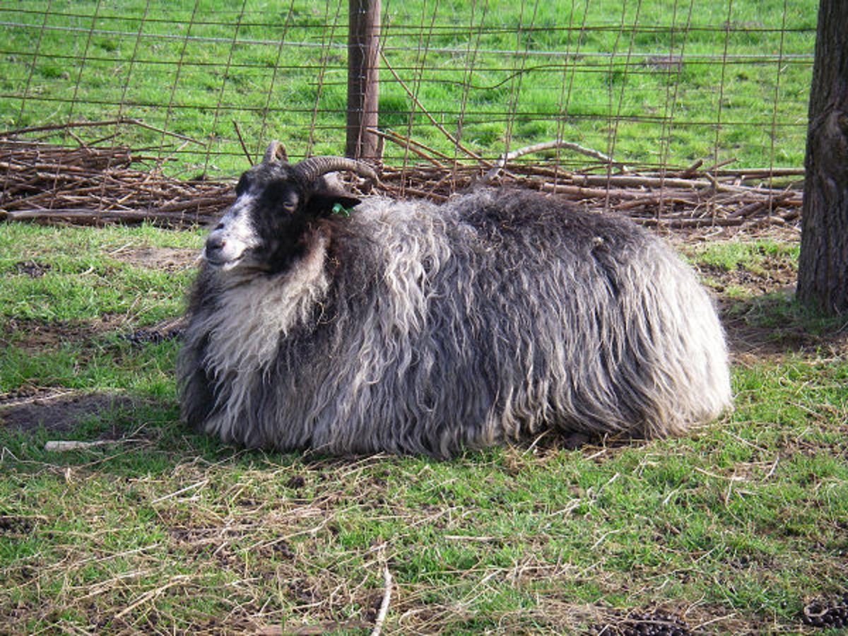ewe Othercat