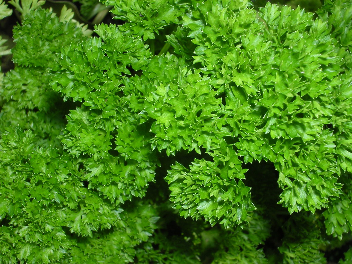 parsley-sage-rosemary-and-thyme-the-real-story