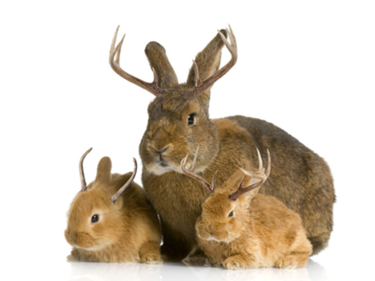 Colorado Jackalope and how to hunt them safely
