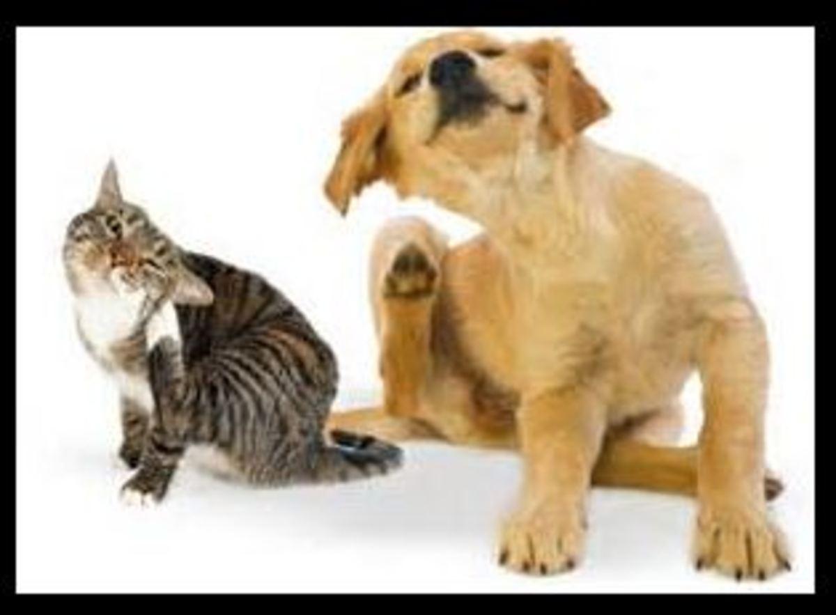 how-to-keep-your-pets-flea-free