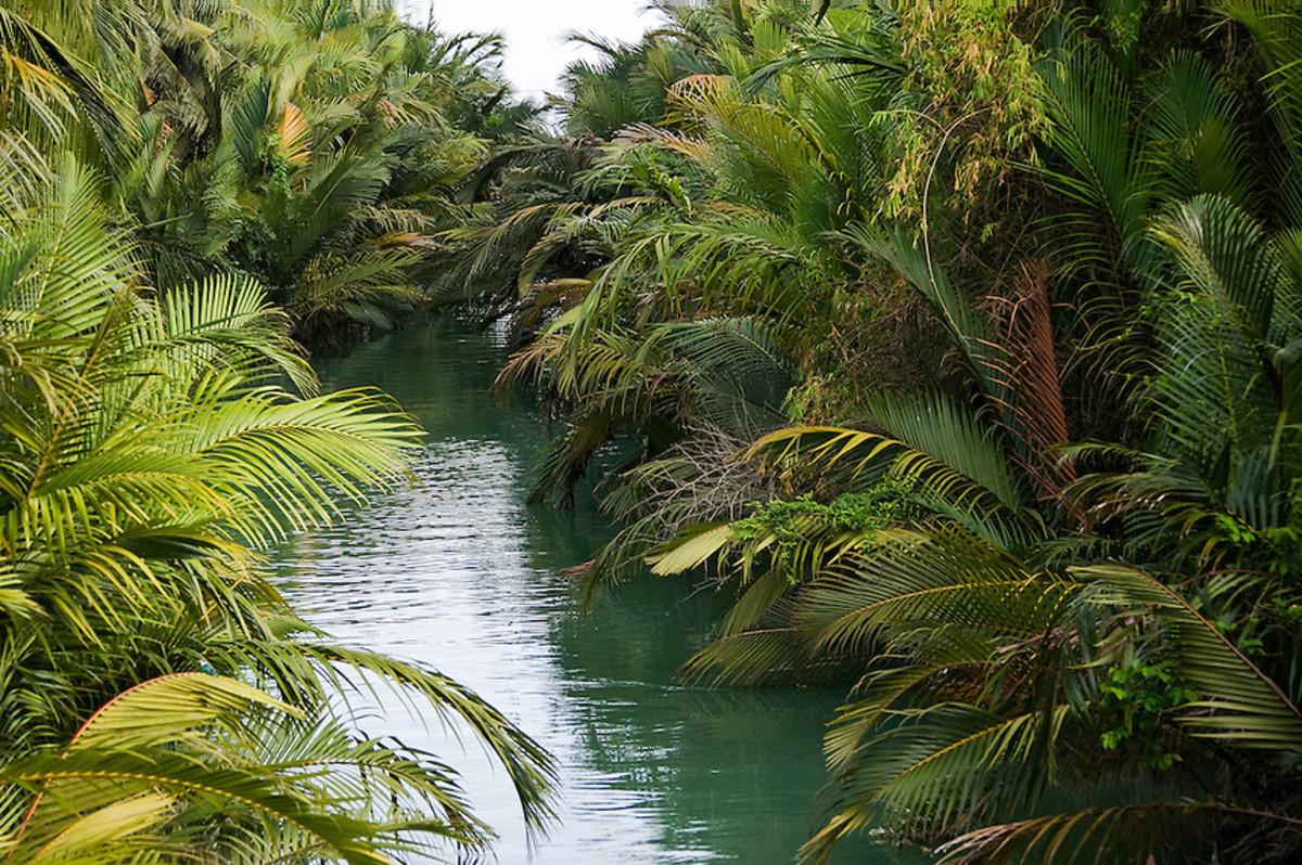 God Really Likes the Palm Tree