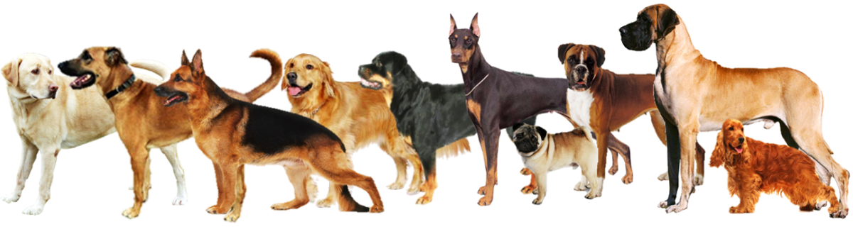 Top  Breeds Of Dogs That Are Homeless