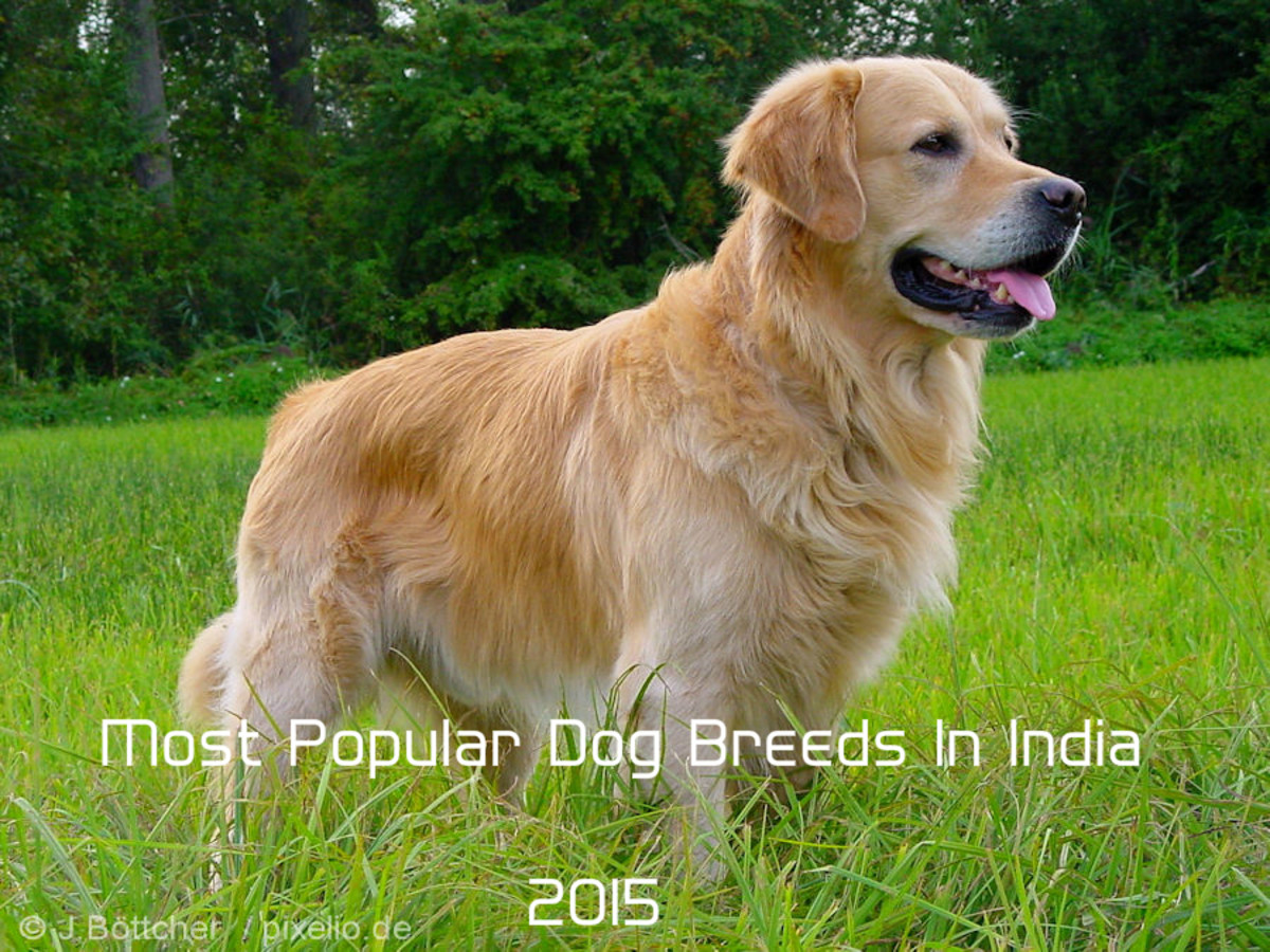 Top 10 Most Popular Dog Breeds In India