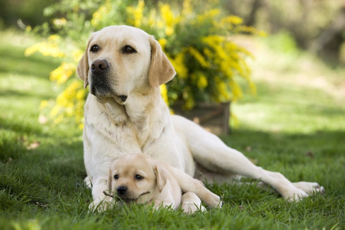 Most Popular Breed Of Dog In India