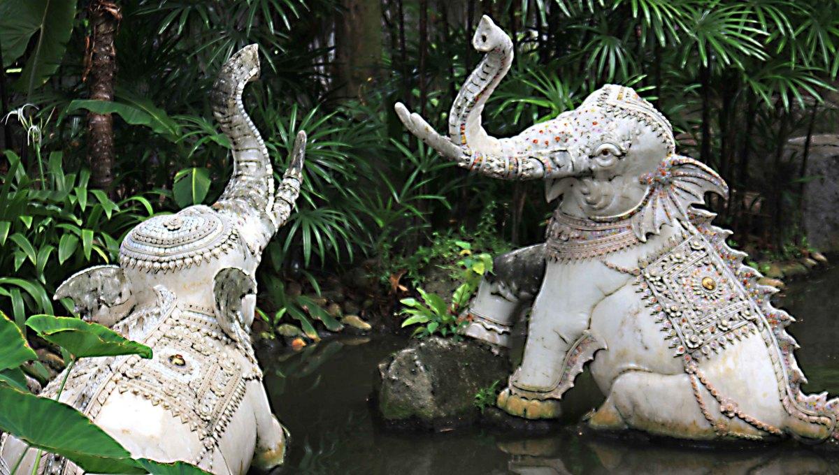 Elephants (single-headed) wallow in a stream in the museum gardens