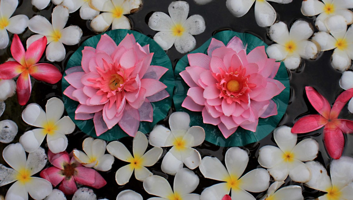 Flower petals in a water bowl