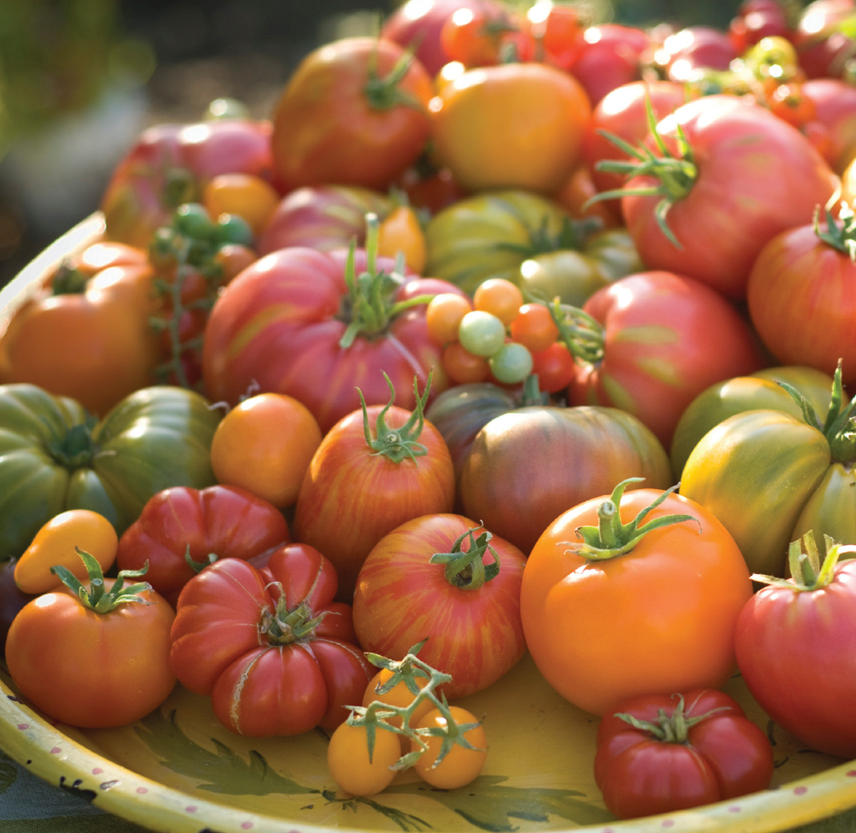 Tomatoes for health benefits
