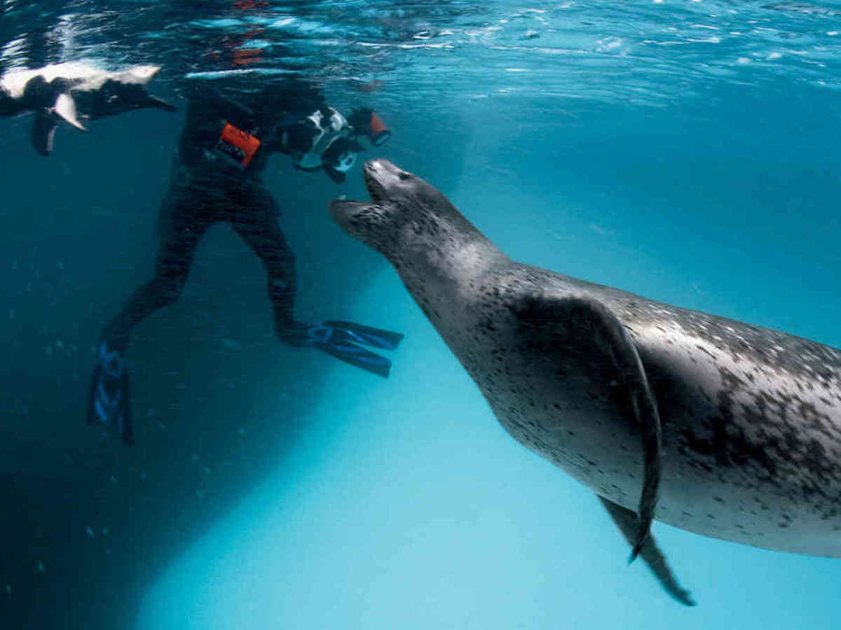 Picture Of A Leopard Seal