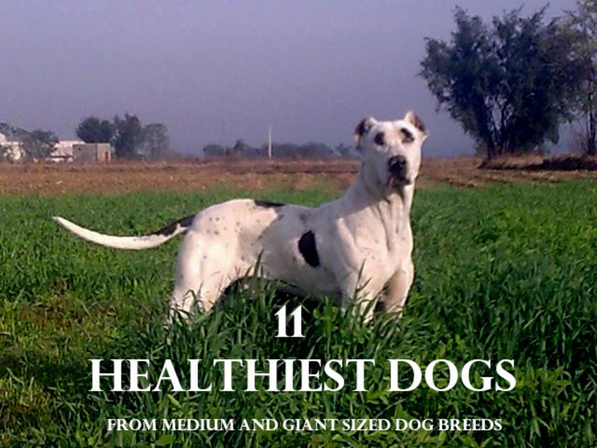 11 Healthiest Dog Breeds