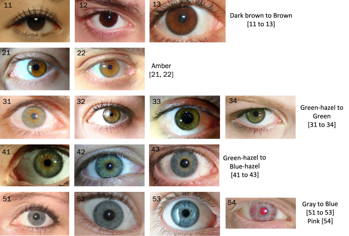 It Would Be Useful Or Even Interesting To Navigate A Spectrum Of Selected Eye Colors And