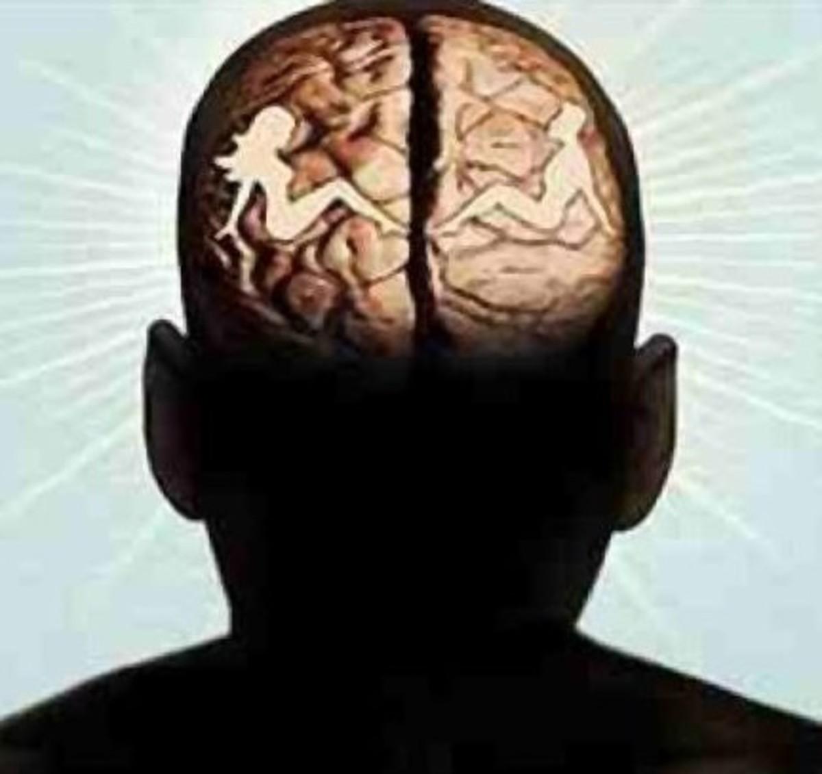 The Sexual Brain ?