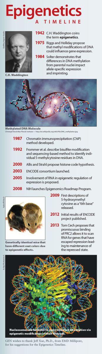 Epigenetics Time Line