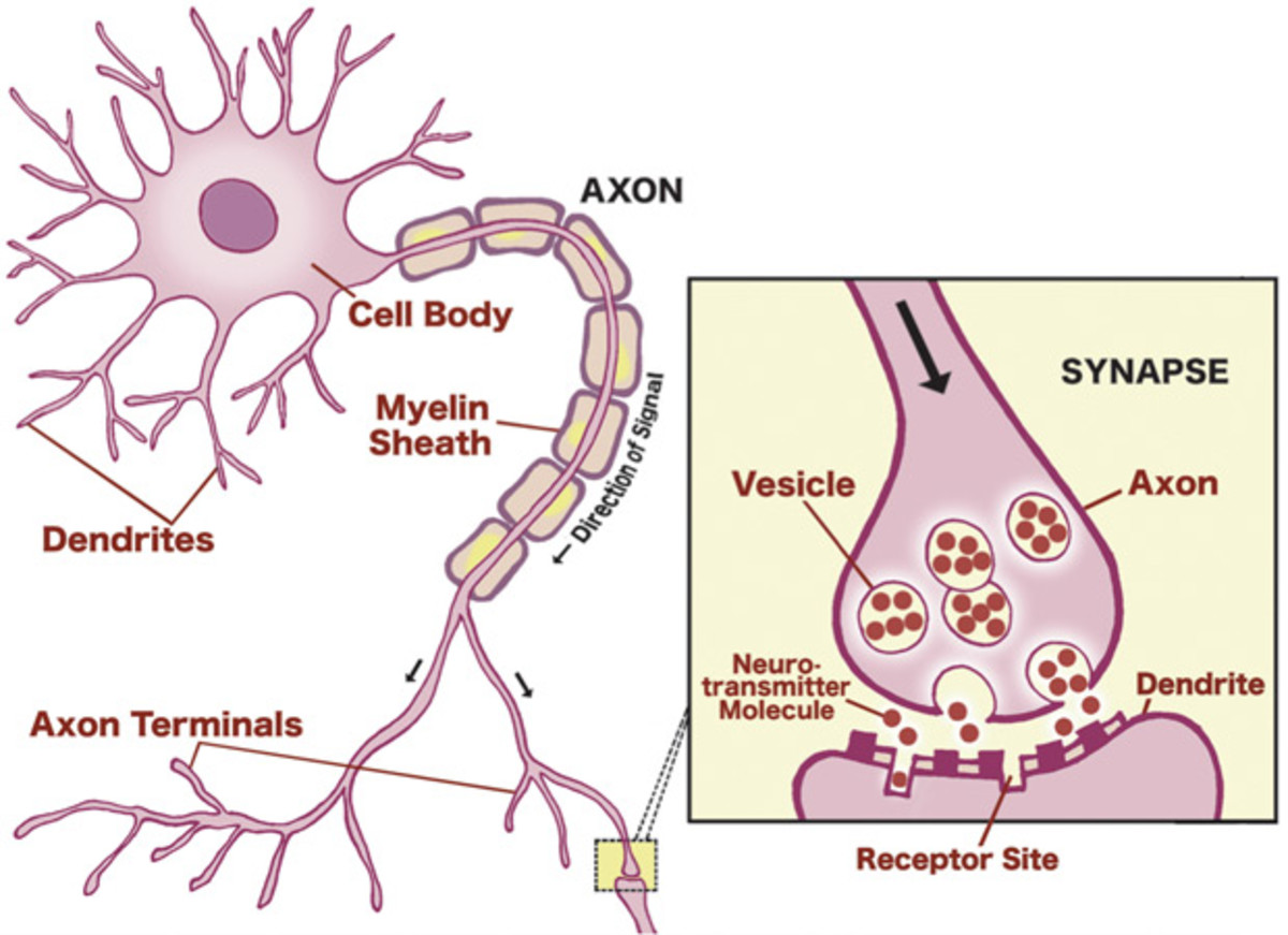 Neural Communications