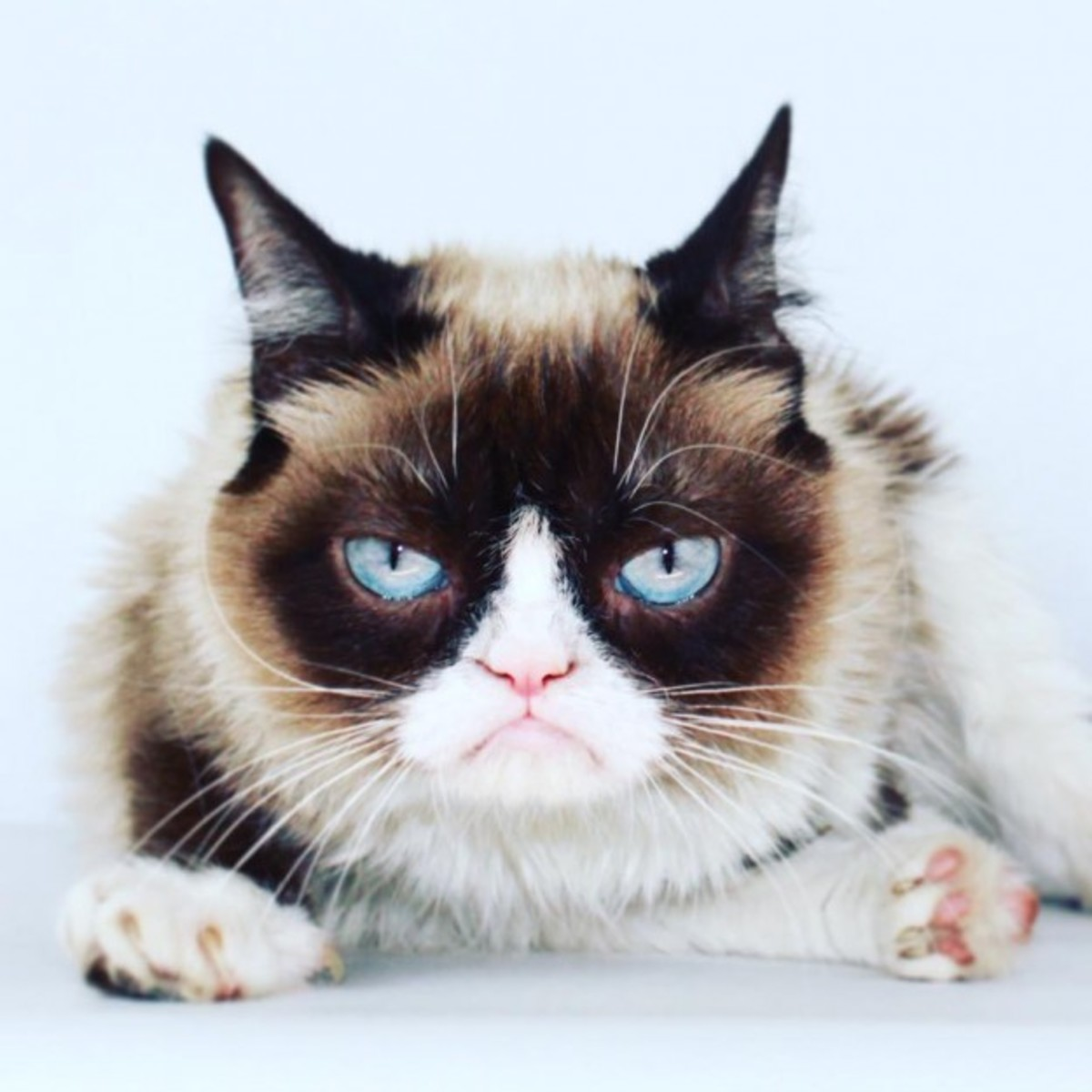 Here's the real Grumpy Cat - Isn't he adorable?
