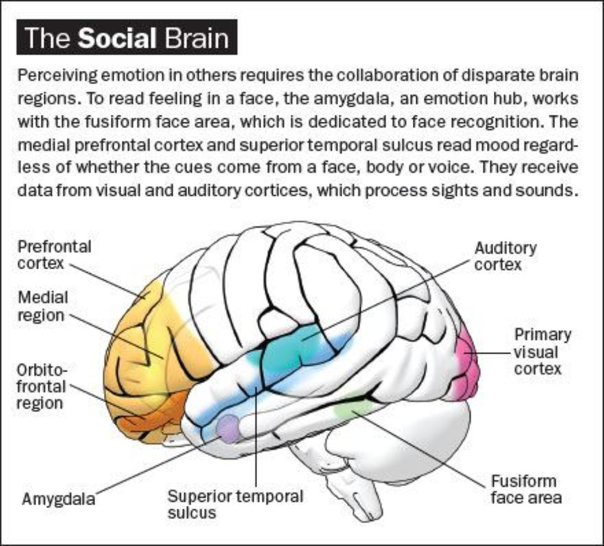 social-brain-and-role-of-play-in-its-development