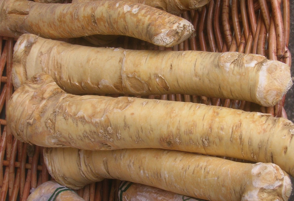 Horseradish - Nutrients - Health Benefits - Recipes