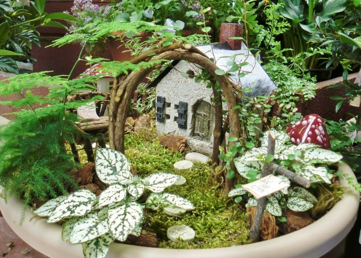 Look what I found at the gardening-forums.com, it's a beautiful set up and I think it's in an empty bird bath or is that a plastic flower pot pan?