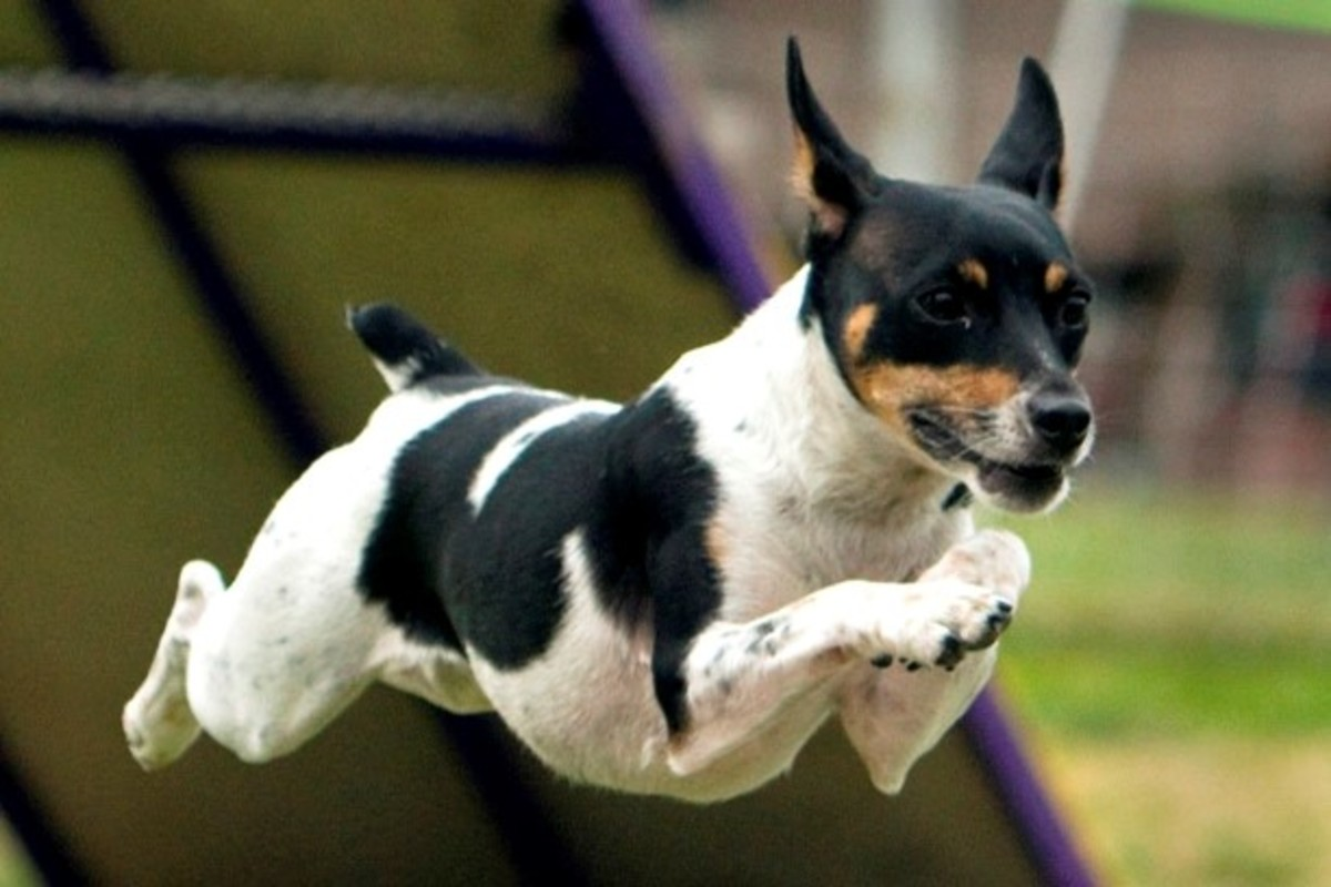 Low-maintenance Small Dog Breeds