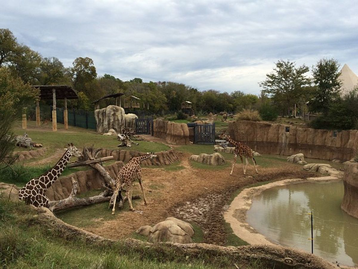 Giraffes, Zebras, Impala, and Elephants in Dallas Zoo Giants of the Savanna exhibit