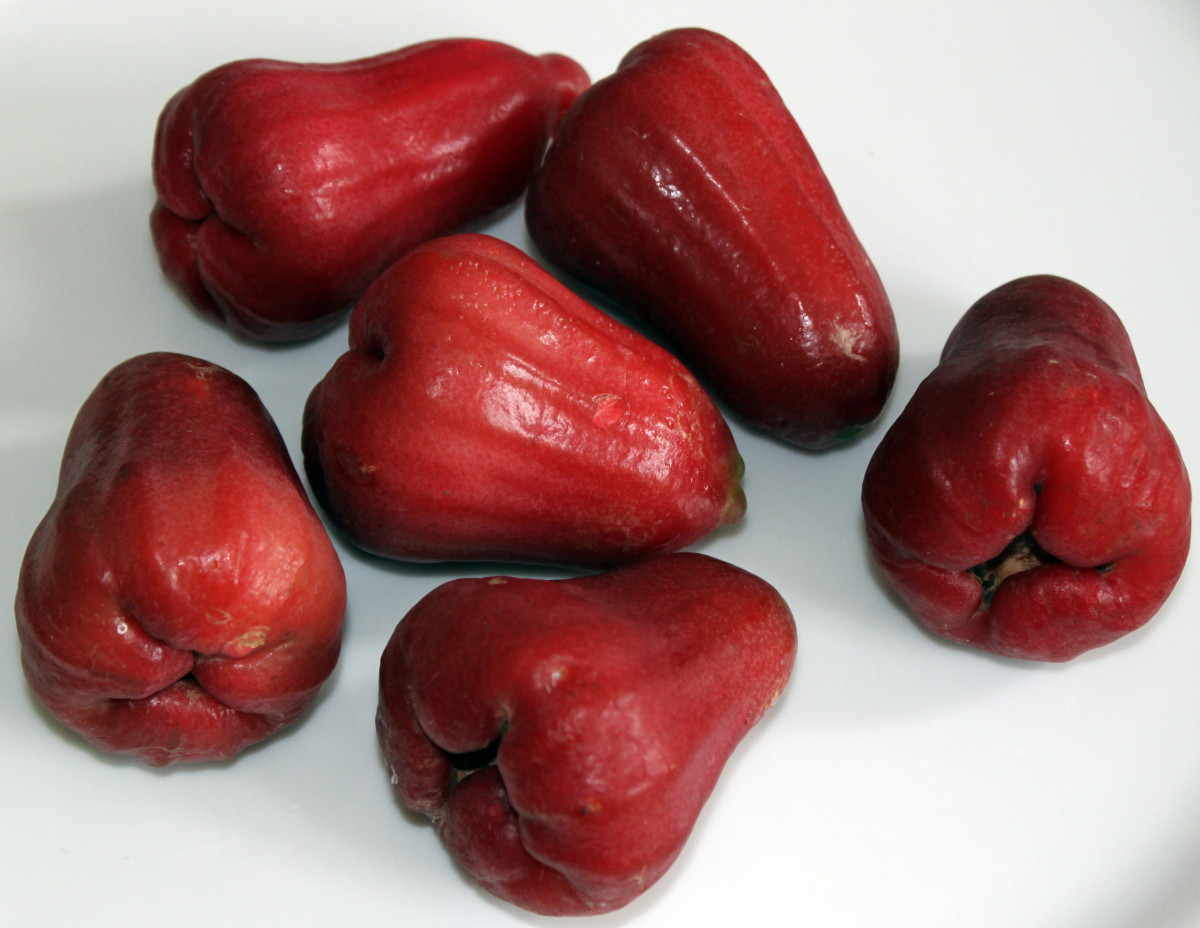 The Exotic Water Apple (Jambu) Fruit