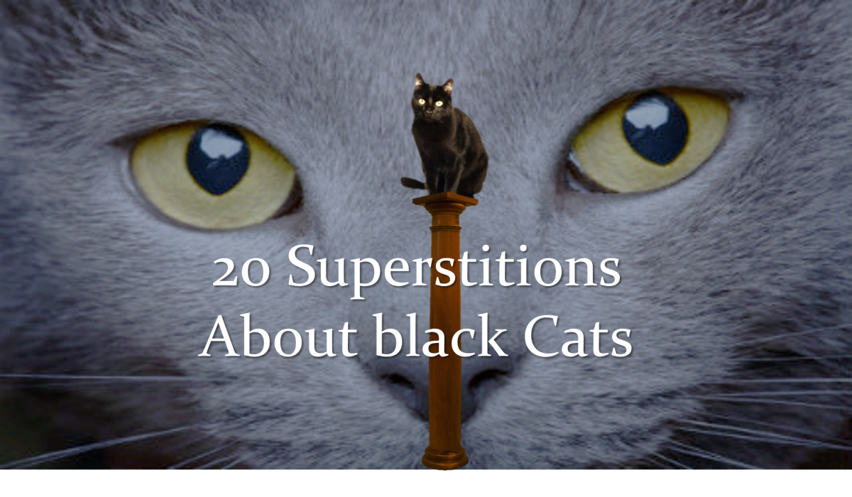 20 Superstitions About Black Cats