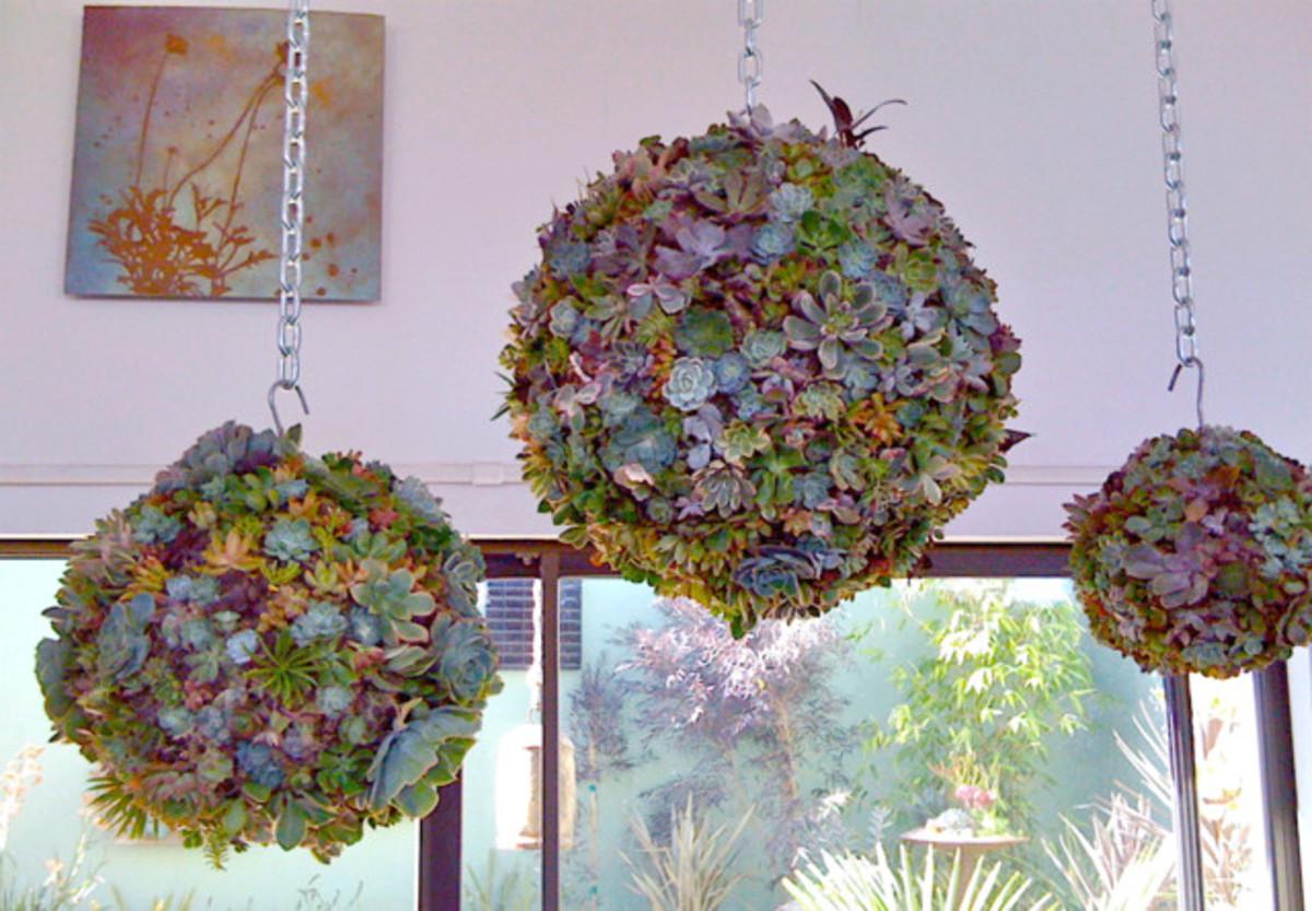 Hanging succulent spheres