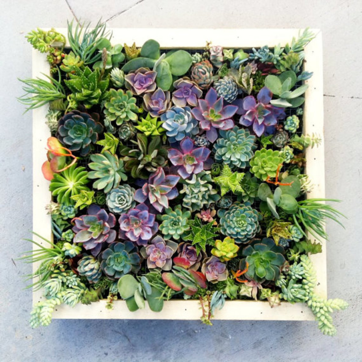 Beautiful Succulent Gardens