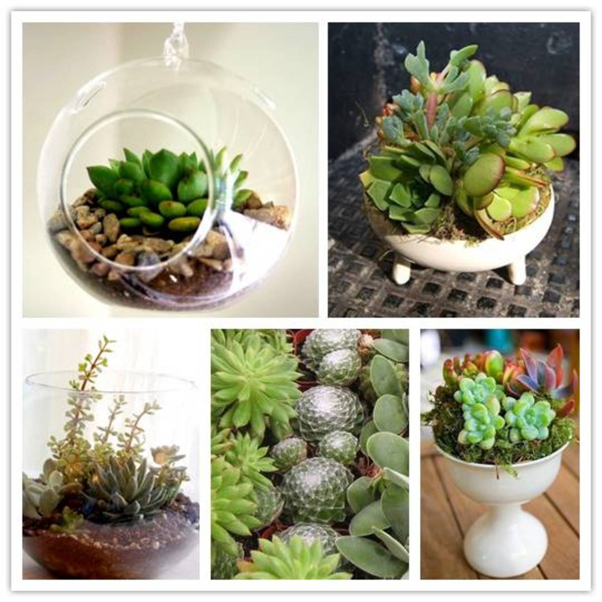 Succulent arrangement ideas