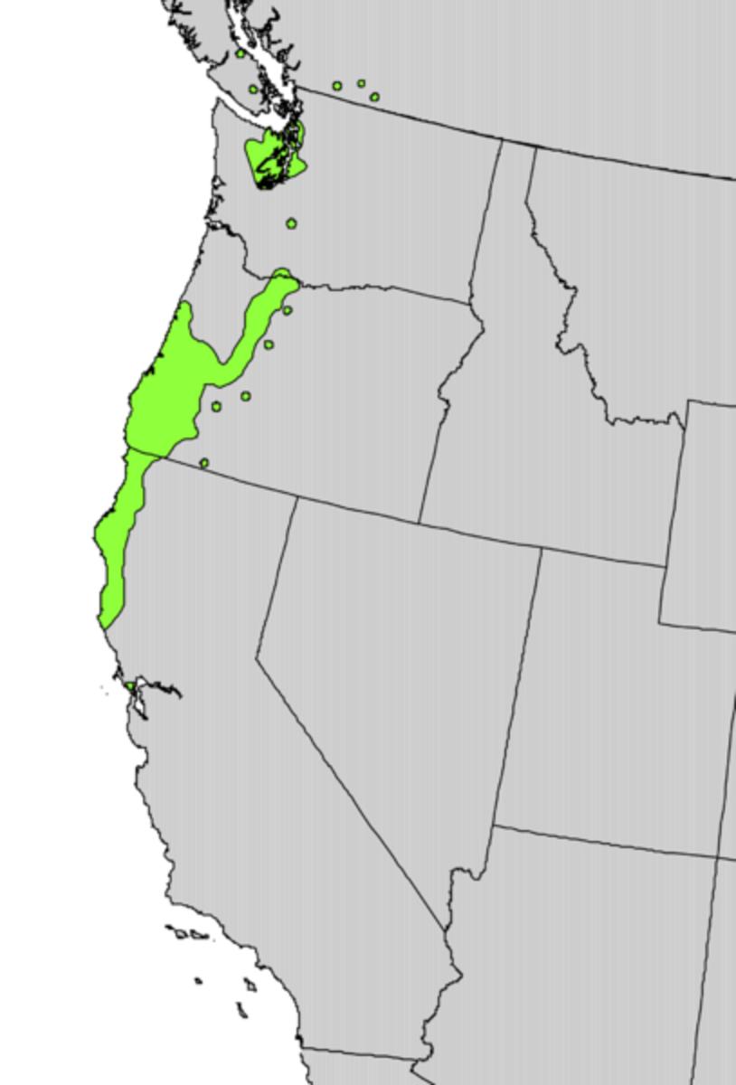 Rhododendron macrophyllum range map