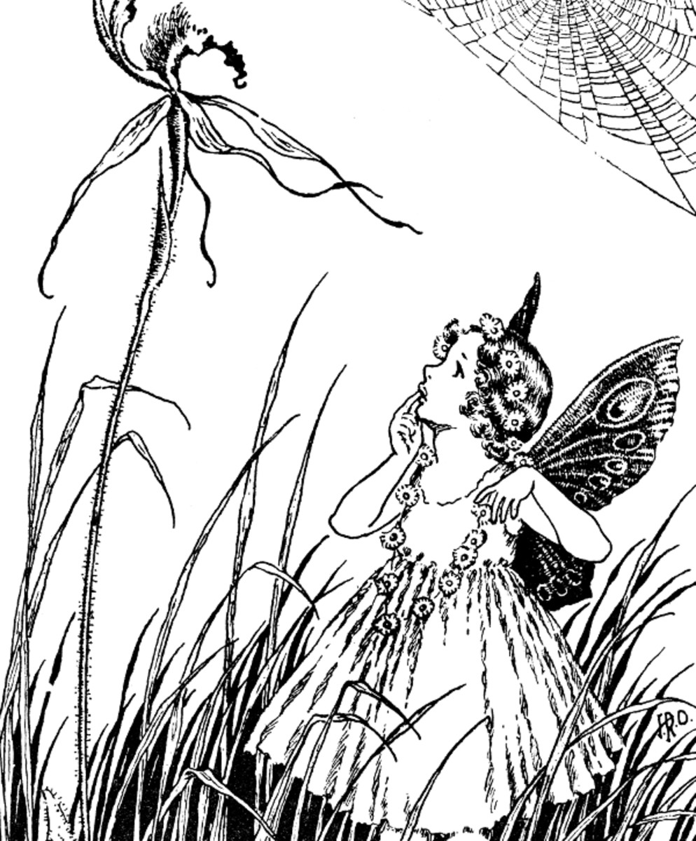 "Here we show a portion of ""Spider Orchid"" - it is from Ida Rentoul Outhwaite's suite published in ""A Bunch of Wild Flowers"" (1933)."