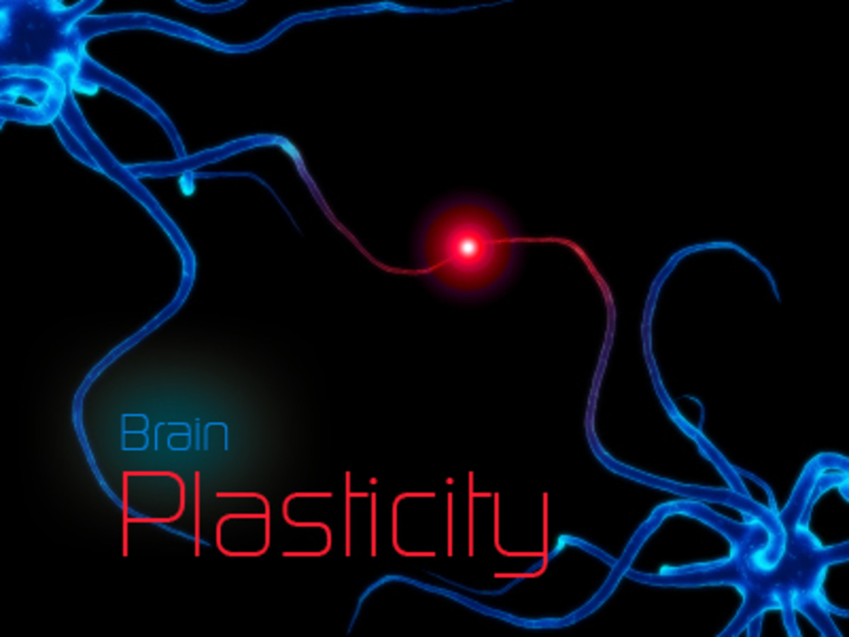 Brain Plasticity: What is it and How Does it Relate to Autism, Alzheimer's, and Normal Learning