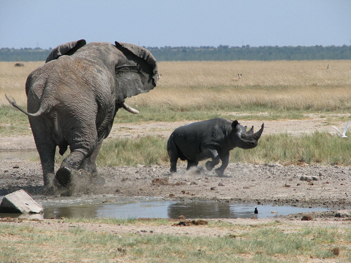 animal-kingdom-rivalries