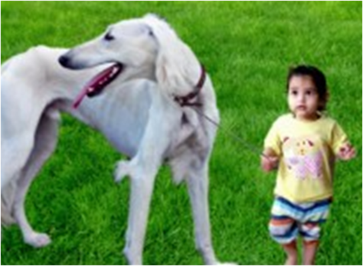 Top Ten Unrecognized Tallest Dogs