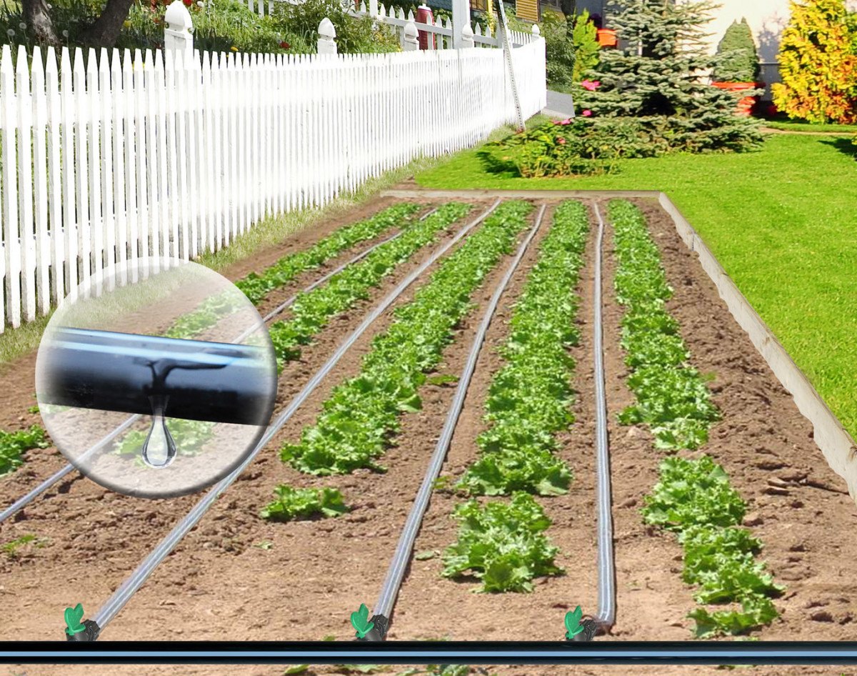 Originally posted at http://galleryhip.com/drip-irrigation-systems-for-vineyards.html