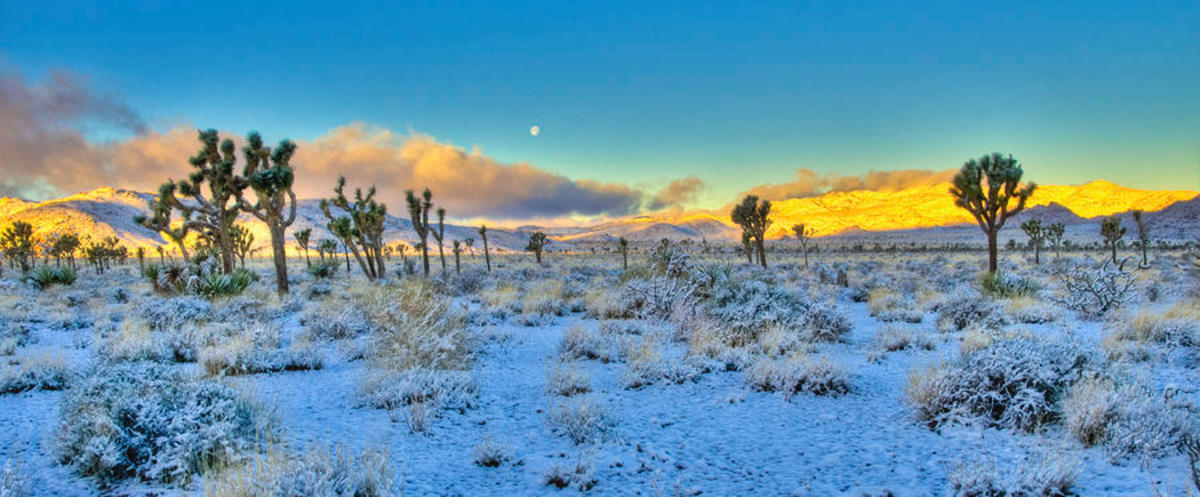 snow is Joshua Tree National Park in Southern California. Photo by Connie Cooper-Edwards
