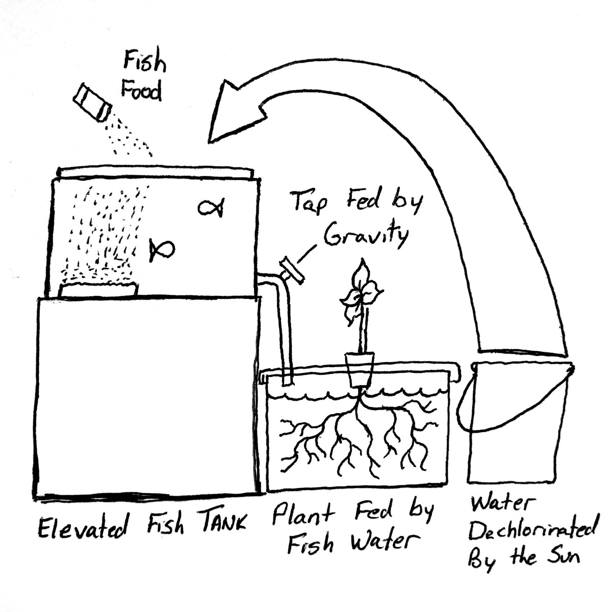 Build an Aquaponic Garden