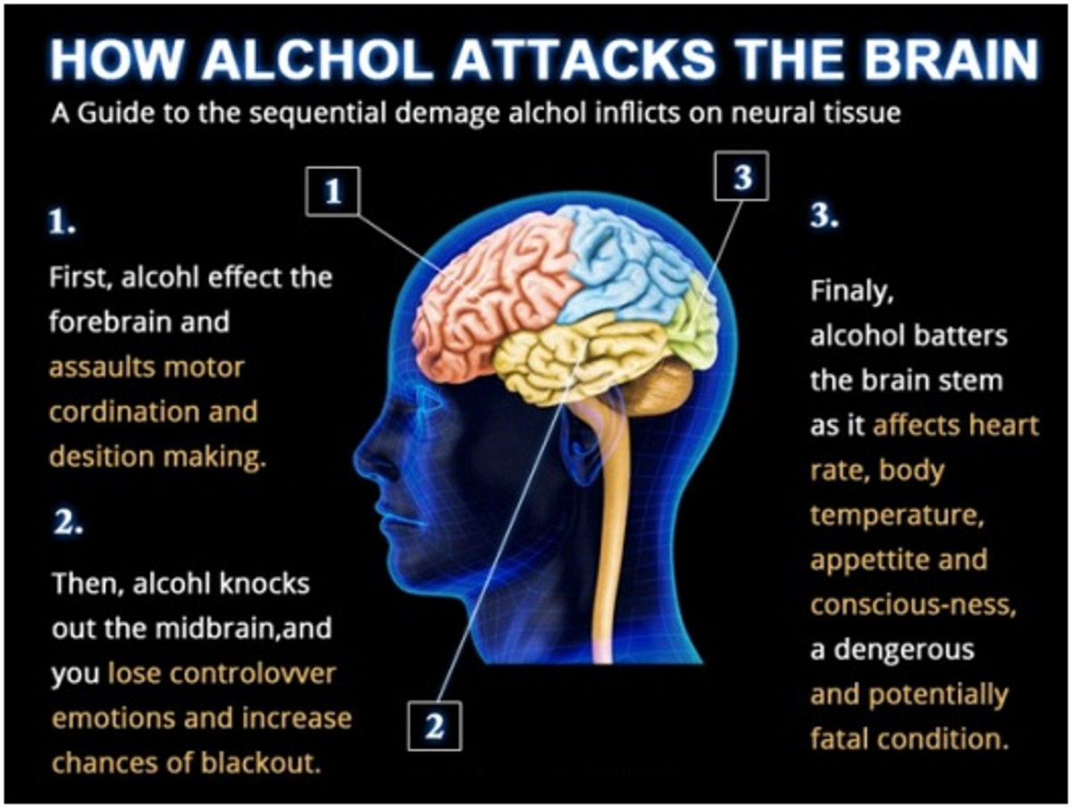 What alcohol does to your brain | HubPages
