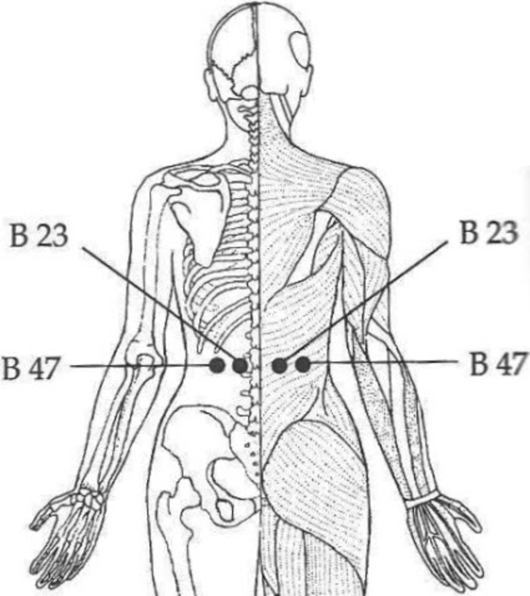 Associated Point of Kidney B23