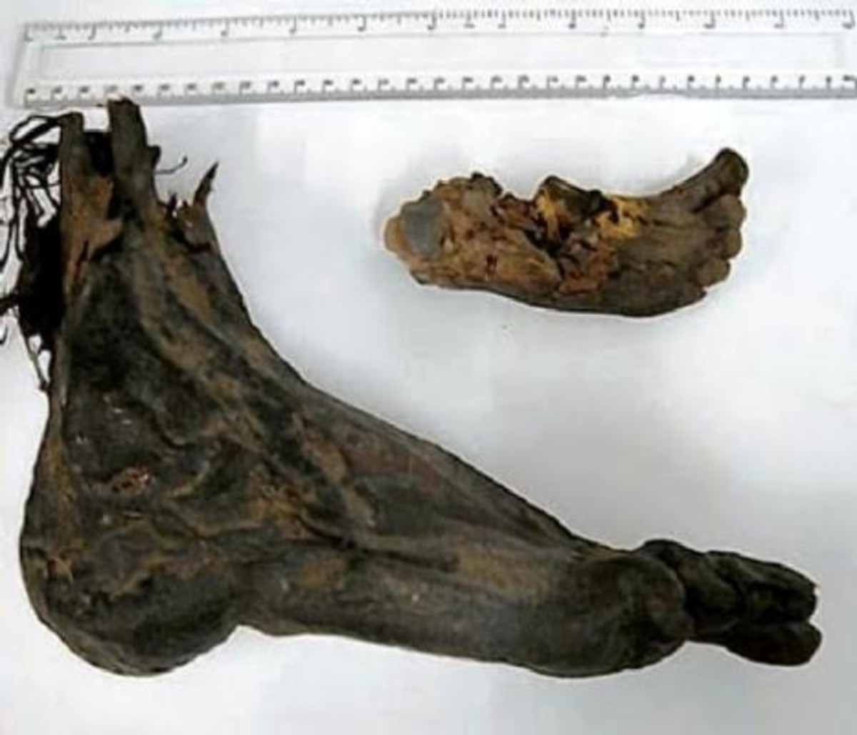 One of the decomposed feet that washed ashore