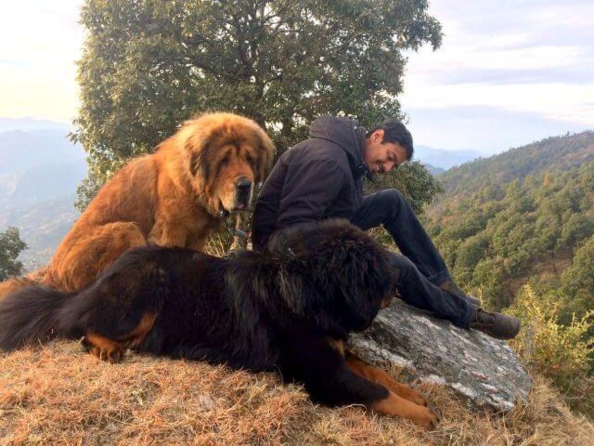 Bhutan Dog Breed