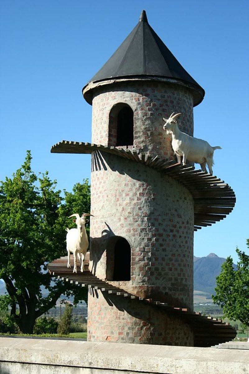 A Goat Tower is a decorative goat house, modeled on a European garden Folly, an early example of which was built in Portugal in the 19th century. This South African goat tower at Fairview Winery was built in the 20th century and became famous.