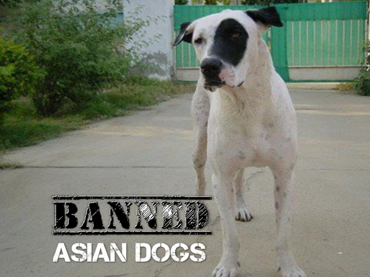 Five Asian Dogs Banned in Other Countries