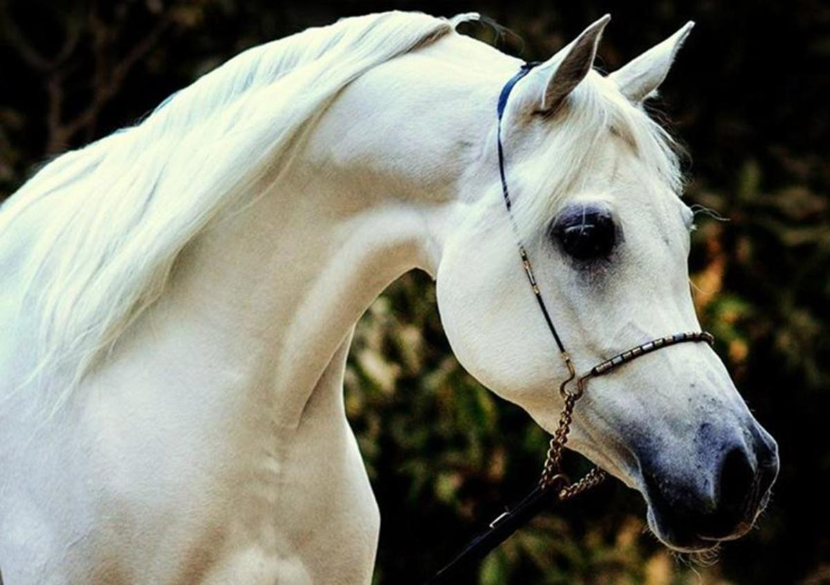 beautiful-horse-breeds-of-the-world