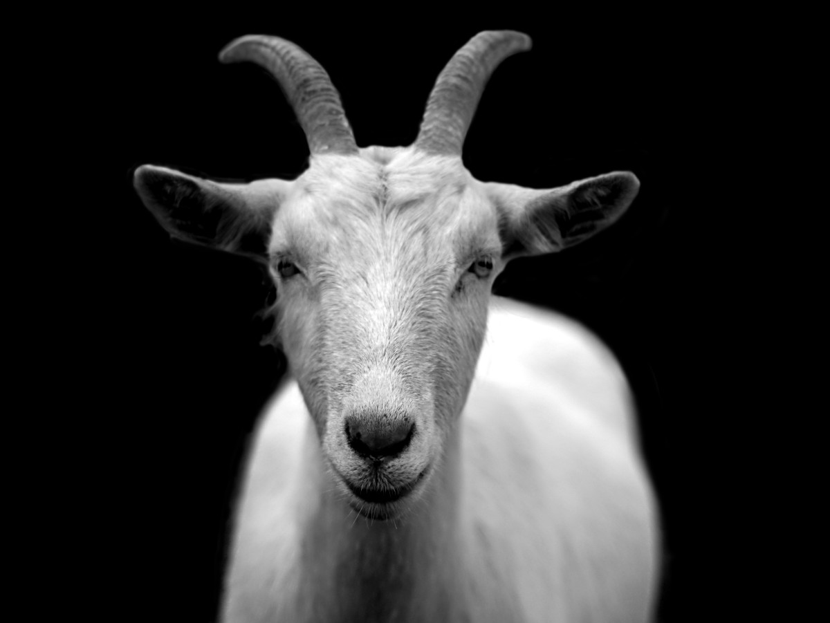 Goat Milk: Benefits and Disadvantages