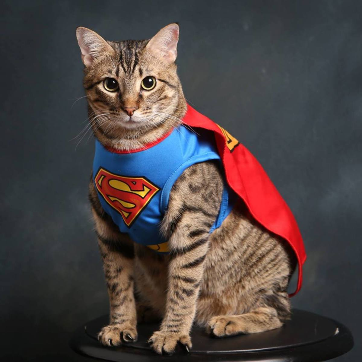 10-incredible-stories-of-heroic-felines