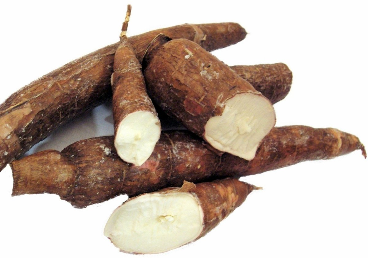 How To Plant and Harvest Cassava